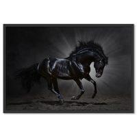 Fekete Ló Poszter