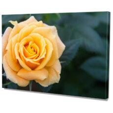 Falikép Sárga Rózsa Vászonkép